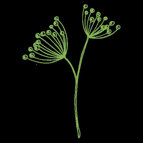 GG Dill flower
